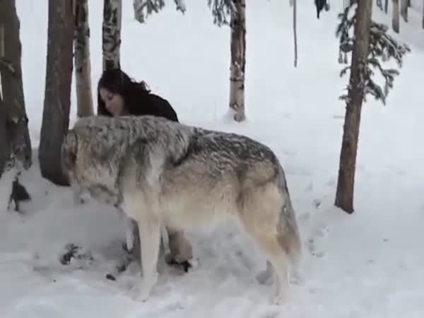 The Heartwarming Moment Kekoa The Giant Timber Wolf Plays With Wildlife