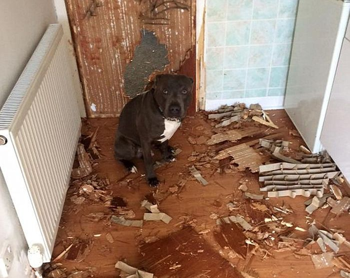 Dog Owner Returns From The Hospital And Finds His Apartment Trashed (2 pics)