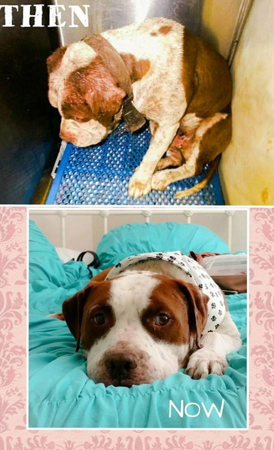Before And After Photos Of Dogs Who Were Thrilled To Be Rescued (25 pics)