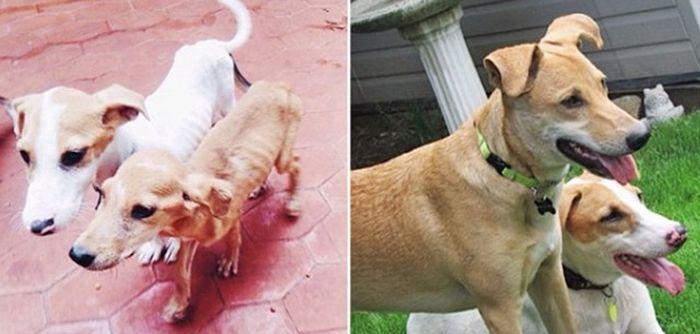 Perros antes y despues de estar Encerrados
