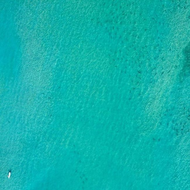 Thousands Of Sharks Spotted Swimming Close To The Beaches Of Florida (4 pics)