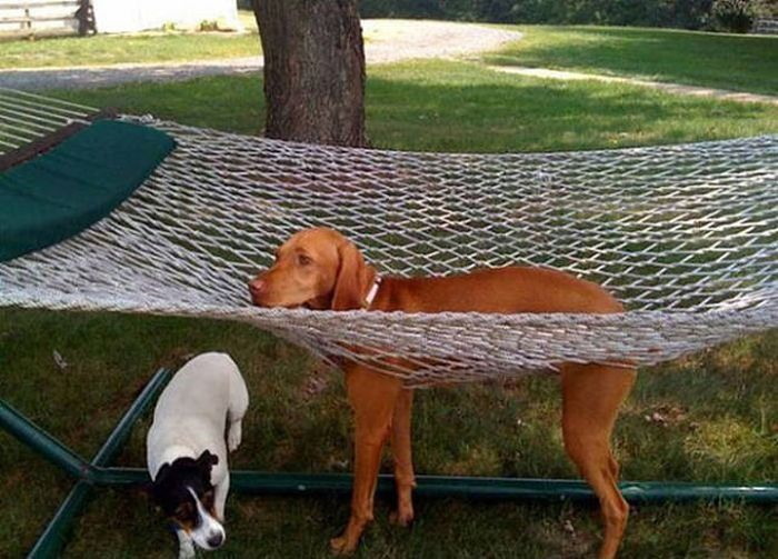 Animals That Have No Idea How They Get Stuck (24 pics)