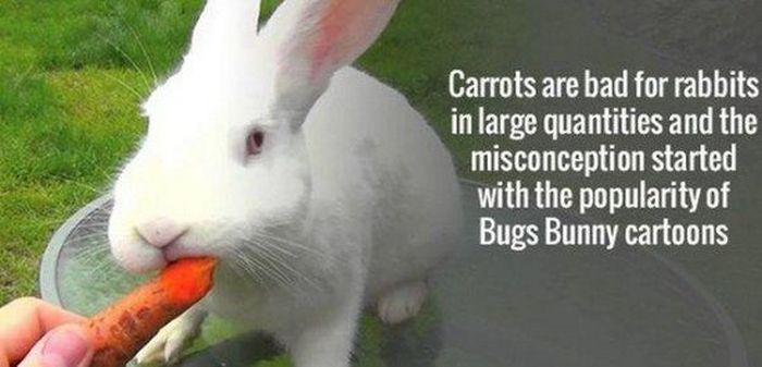 Interesting Facts To Help You Get In Touch With Your Intellectual Side (27 pics)