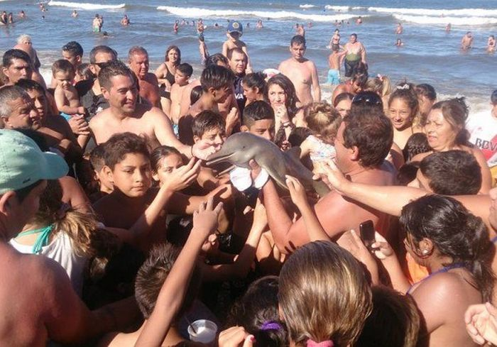 Young Dolphin Dies After People Carry It To The Beach For Pictures (4 pics)