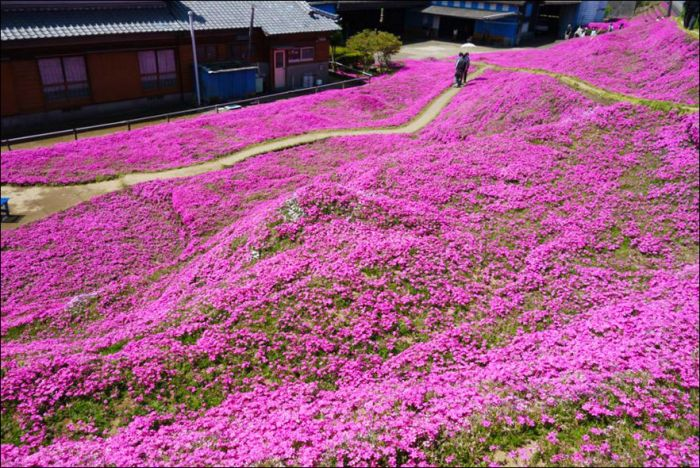 Chinese Man Creates Giant Flower Garden For His Blind Wife (9 pics)