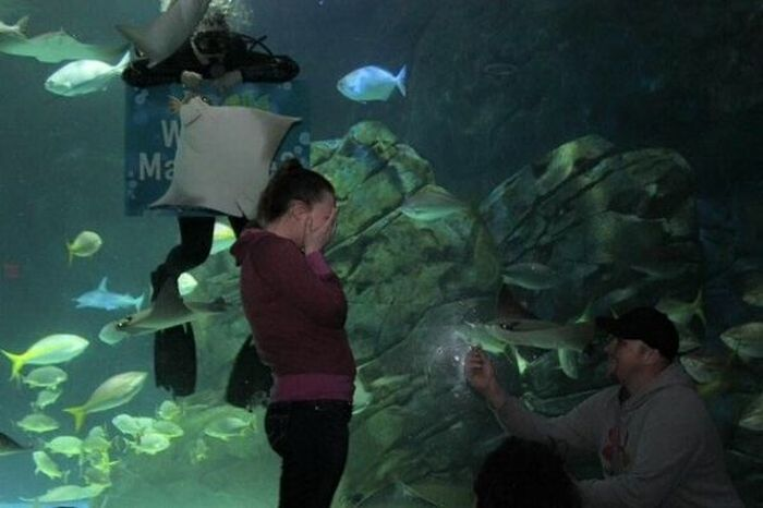 Man Gets An Assist From The Local Aquarium During His Marriage Proposal (3 pics)