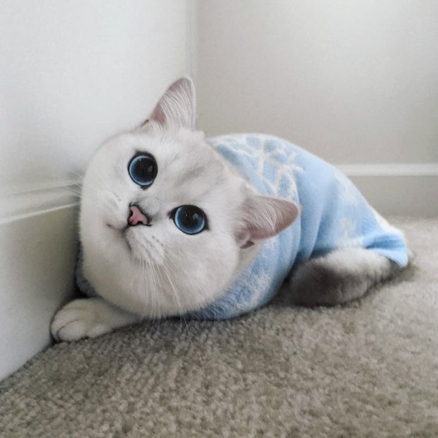 Be Careful Because You Might Get Lost In This Cat's Beautiful Eyes (17 pics)