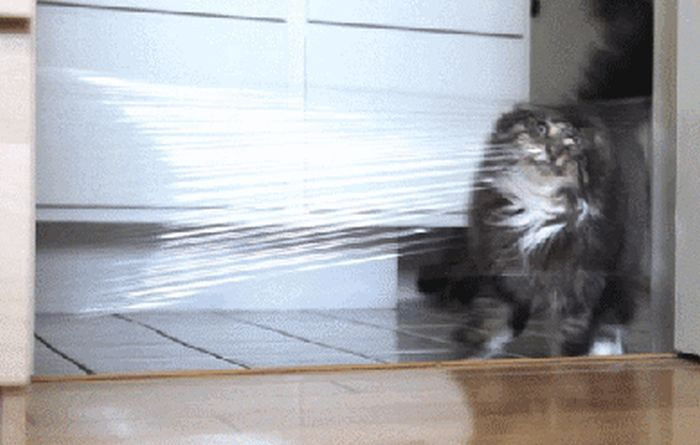 Gifs That Show Pets Making The Cutest Mistakes Ever (17 gifs)