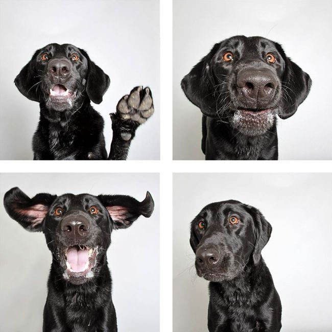 Shelter Dogs Find Forever Homes Thanks To A Fun Photo Booth (20 pics)