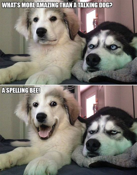 Bad Pun Dog Is Here With Some Adorable Jokes And Terrible Puns (10 pics)