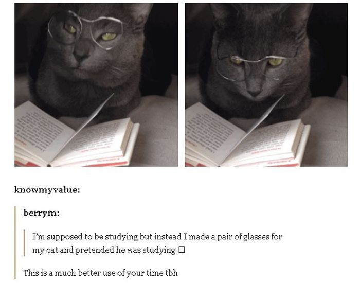 Awesome And Hilarious Jokes Brought To You By Tumblr (19 pics)