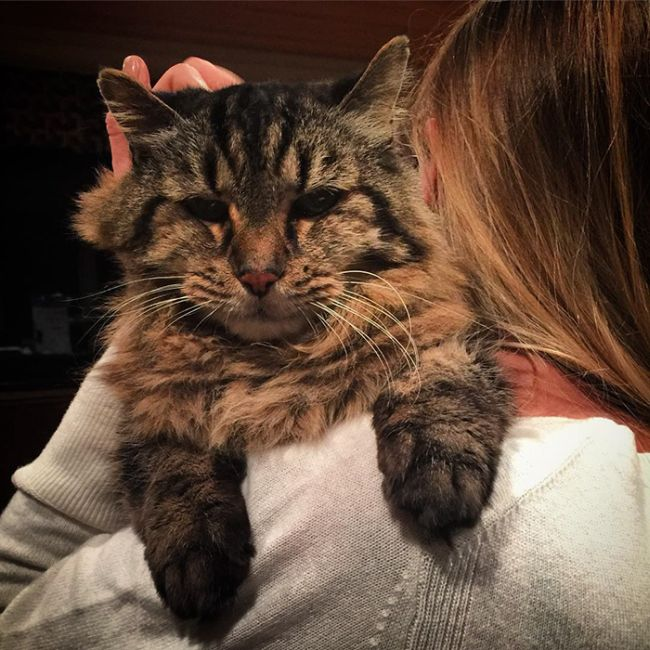 The World's Oldest Cat Was Recently Adopted From A Shelter (11 pics)