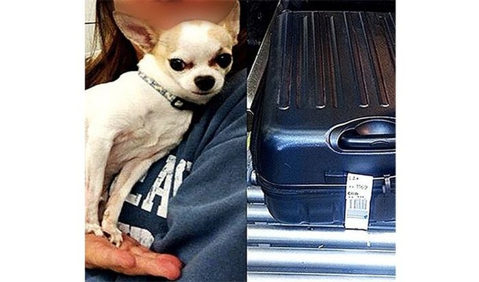 The Craziest Items Ever Confiscated By TSA At The Airport (24 pics)