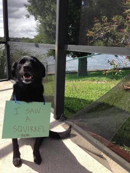 Dog Shaming Never Stops Being Funny (35 pics)