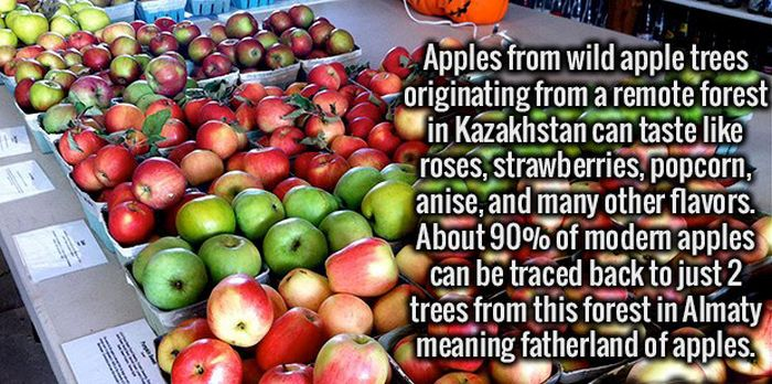 Clear Your Mind Because It's Time To Load It Up With Fun Facts (22 pics)