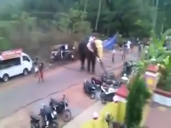 Aggressive Elephant