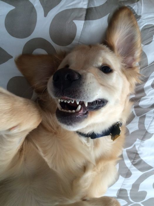 This Adorable Puppy With Braces Will Steal Your Heart (7 pics)