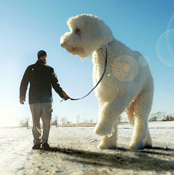 Guy Turns His Dog Into A Giant With Some Help From Photoshop (25 pics)