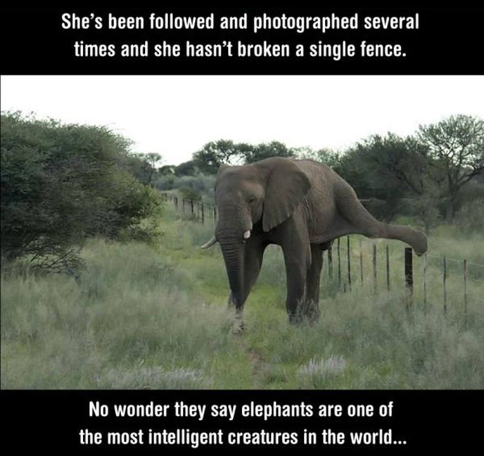 Photos That Prove Elephants Aren't Just Smart, They're Also Polite (4 pics)