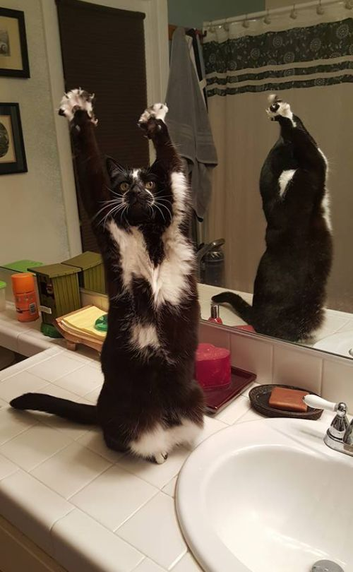 This Cat Throws Her Paws In The Air And Waves Them Like She Doesn't Care (5 pics + video)