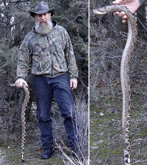 You Won't Believe That This Isn't A Real Snake (9 pics)