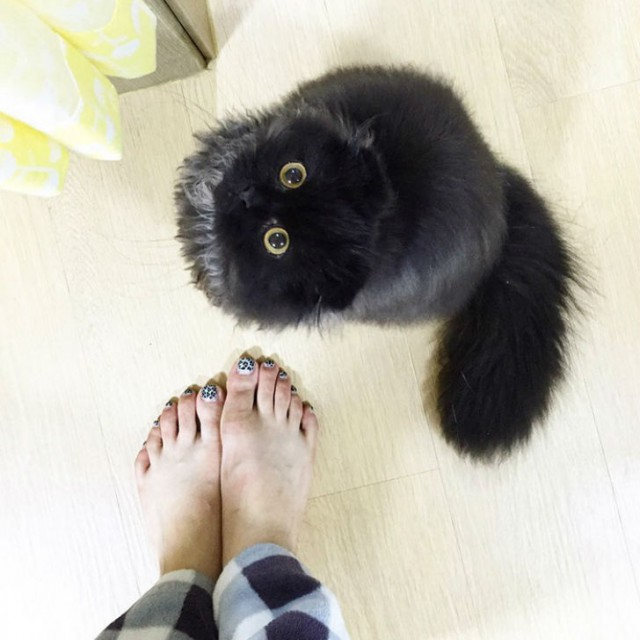This Poor Cat Looks Like It's Terrified All The Time (15 pics)