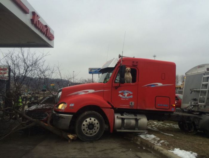Dog Sends A Semi Truck Crashing Right Into A Tree (3 pics)
