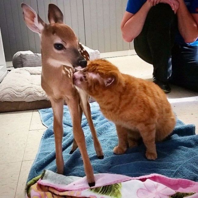 Cat Gets Rescued After Getting Caught In A House Fire (11 pics)