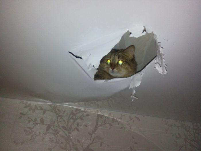 Cats Create A New View From Their Favorite Hiding Spot (2 pics)