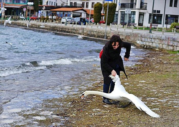A Swan Died Just So This Woman Could Take A Selfie (3 pics)
