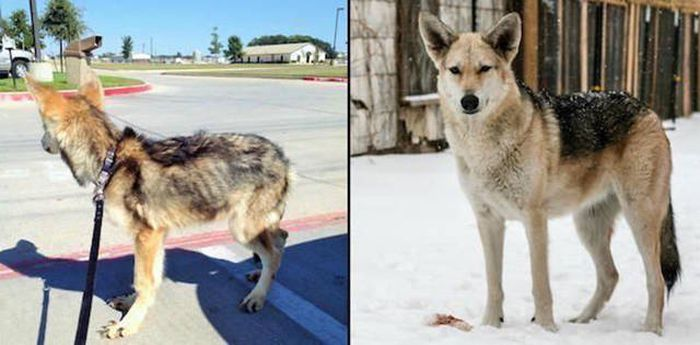Before And After Photos Of Animals Who Found Their Forever Homes (31 pics)