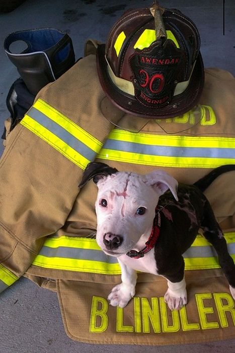 Lucky Puppy Gets Pulled From A Raging Fire In A Burning Barn (12 pics)