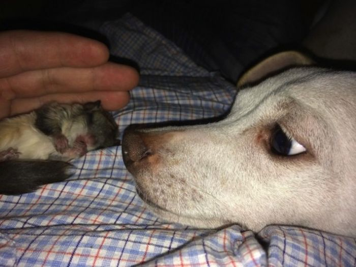 Man Nurses A Blind Baby Squirrel Back To Health (15 pics)