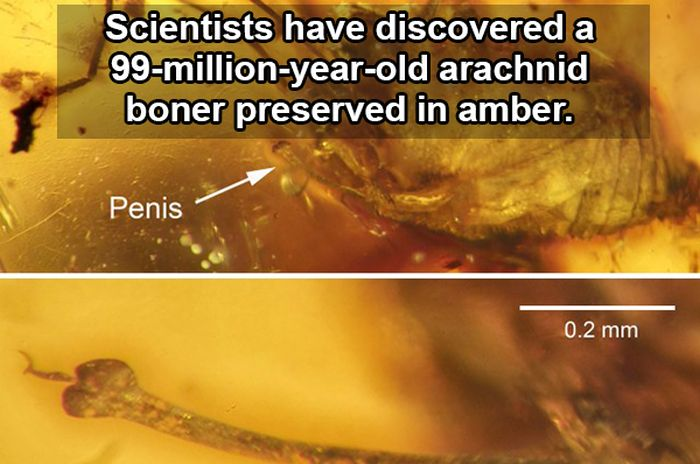 Fascinating Facts And Stats About Sex That Will Arouse Your Brain (10 pics)