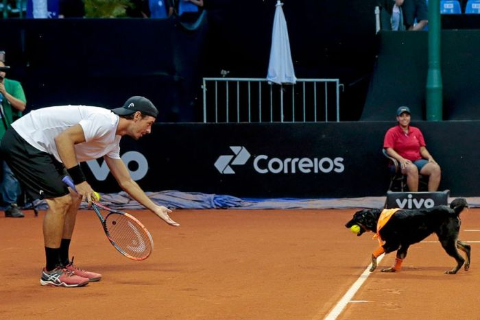 Shelter Dogs Get Their Dream Job Working At The Brazil Tennis Open (4 pics + video)