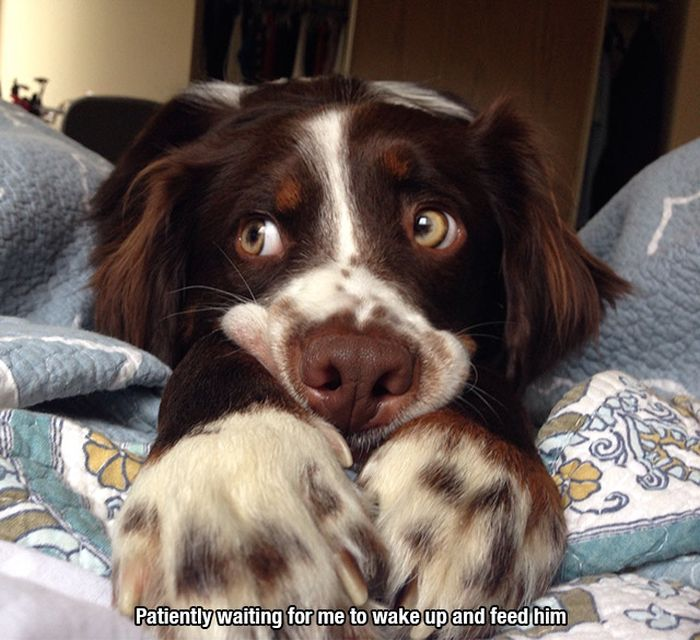 A Tribute To All The Awesome Dogs Around The World (23 pics)