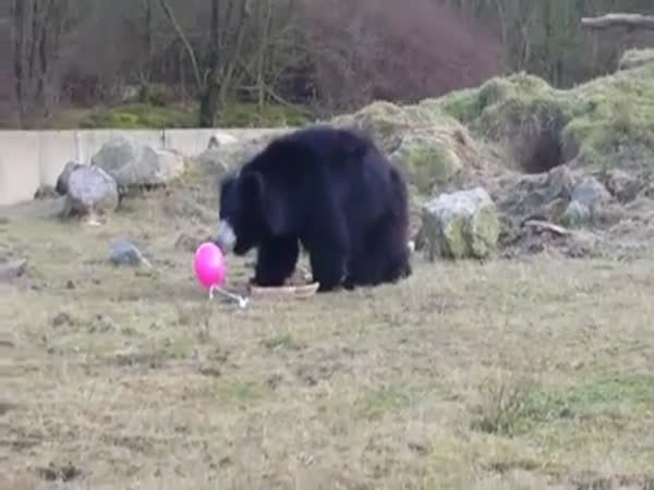 These Three Bears Have No Idea What To Do About This Floating Pink Balloon