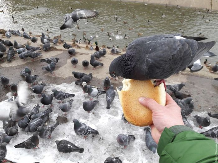 If You Don't Feed The Birds They'll Help Themselves (4 pics)