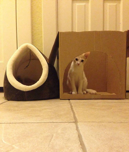 Why You Should Never Ever Buy Gifts For Cats (39 pics)