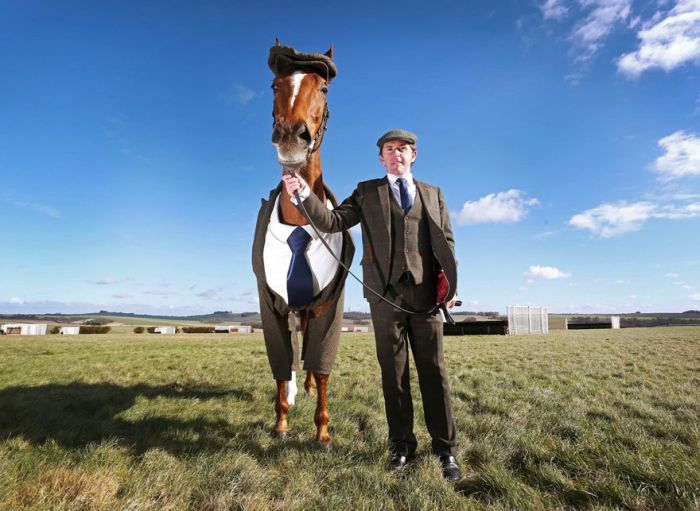 This Horse Looks Absolutely Stunning In A Three Piece Suit (4 pics)
