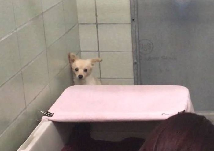 Shelter Staff Finally Finds A Way To Get Through To A Scared Dog (5 pics)