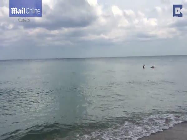 Shark On The Beach