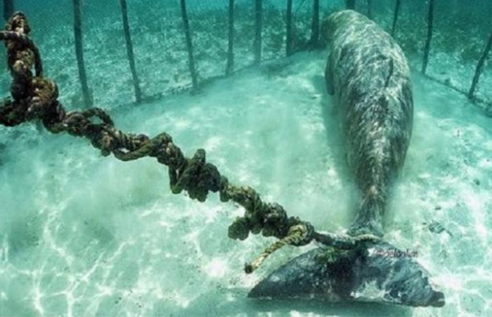 Divers Discover Two Sea Creatures Trapped In Cages Underwater (3 pics)