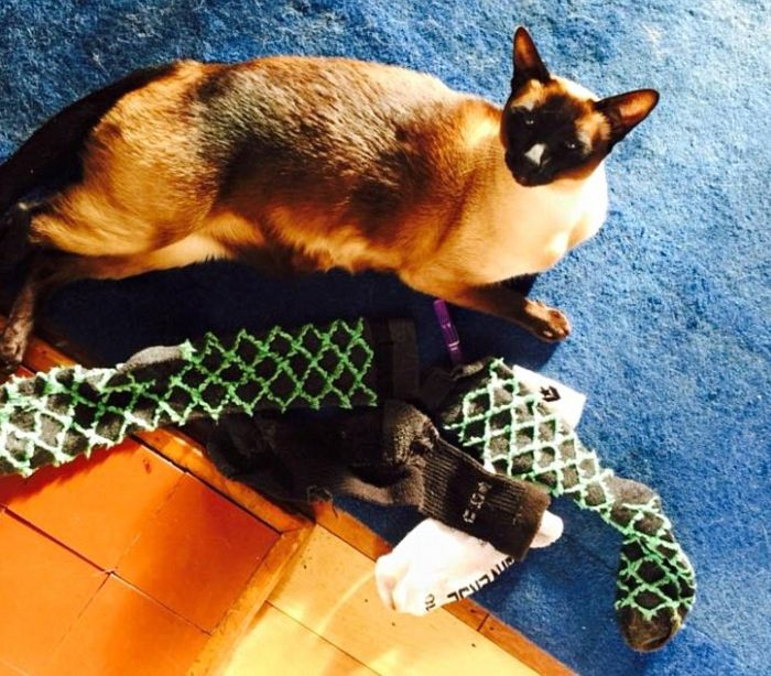This Cat Burglar Loves To Steal Underwear (3 pics)