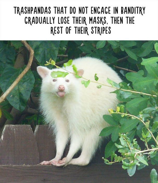 Funny Facts That Will Change The Way You See Animals (48 pics)