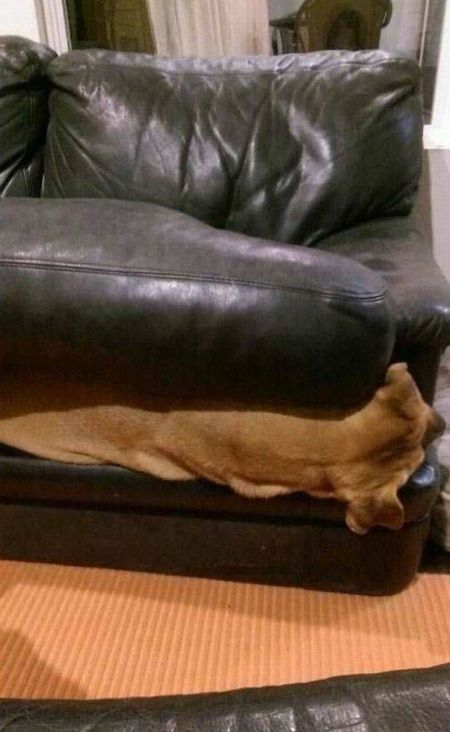 Dog Needs To Find A New Hiding Spot (3 pics)