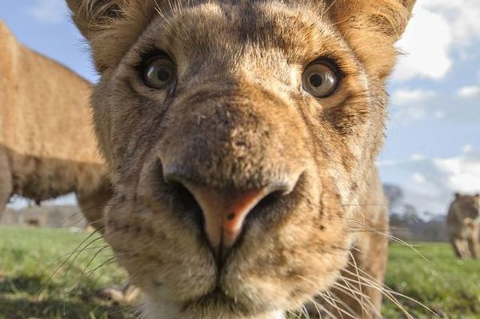 Up Close And Personal With Some Of The World's Most Dangerous Animals (6 pics)