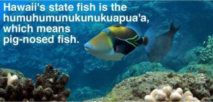 Interesting facts about the beautiful state of hawaii 20 for Hawaii state fish
