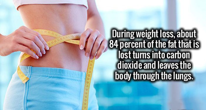 Fresh Facts That Will Make Your Brain Happy (19 pics)