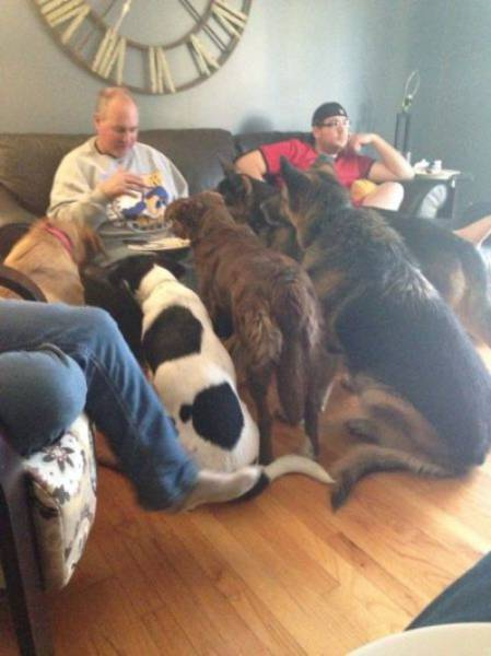 You Can Always Count On A Dog When You Need A Friend (35 pics)